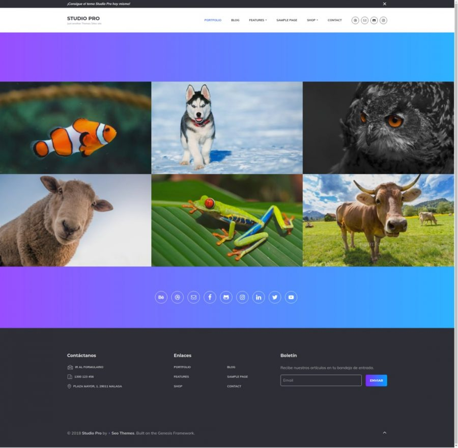 Genesis Portfolio Pro en Studio Pro